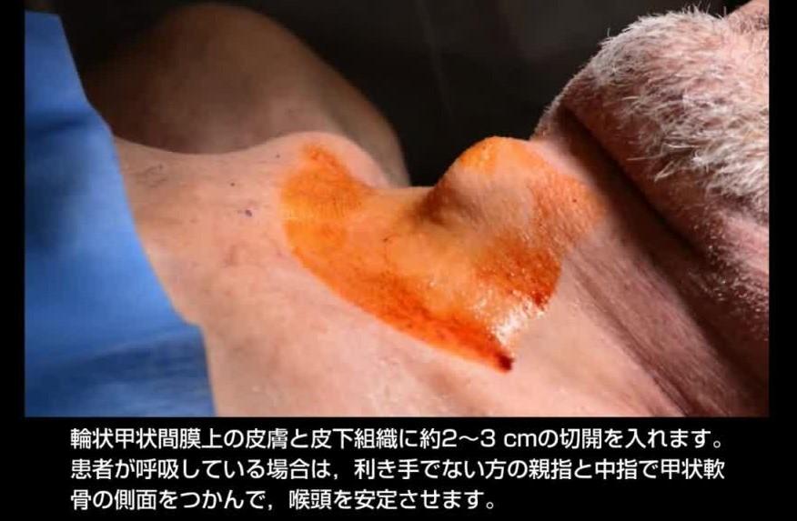 f:id:tokyotsubamezhenjiu:20210218114934j:plain