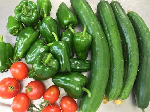 プランターで収穫した野菜。きゅうり、ピーマン、トマト
