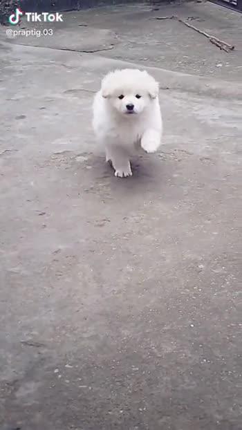 Cute Dog Videos For Whatsapp Status : videos, whatsapp, status, 🎭Whatsapp, Status, #🎭Whatsapp, Video, Vaishu, Shinde, ShareChat, Funny,, Romantic,, Videos,, Shayari,, Quotes