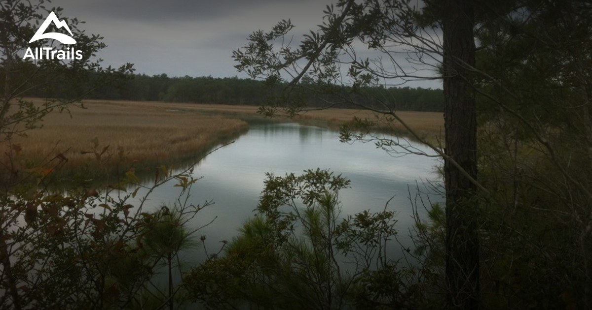 Best Trails in Francis Marion National Forest  South