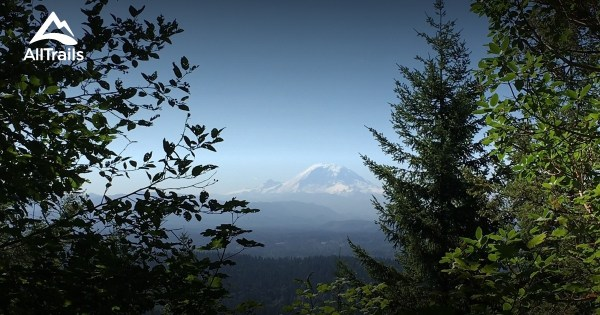 Best Trails in Tiger Mountain State Forest Washington