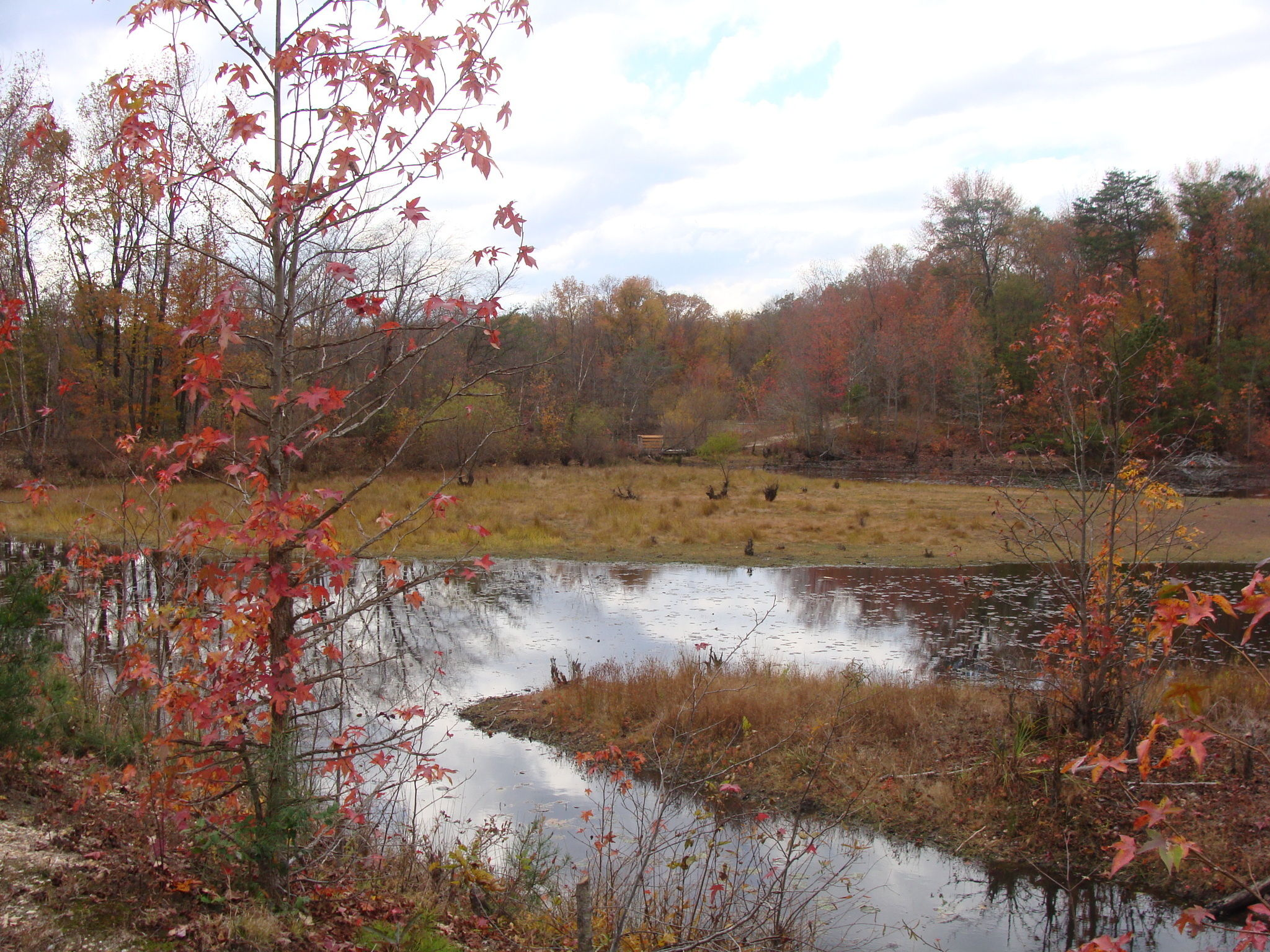 Piney Orchard Nature Preserve Duck Cove Pond Loop Trail