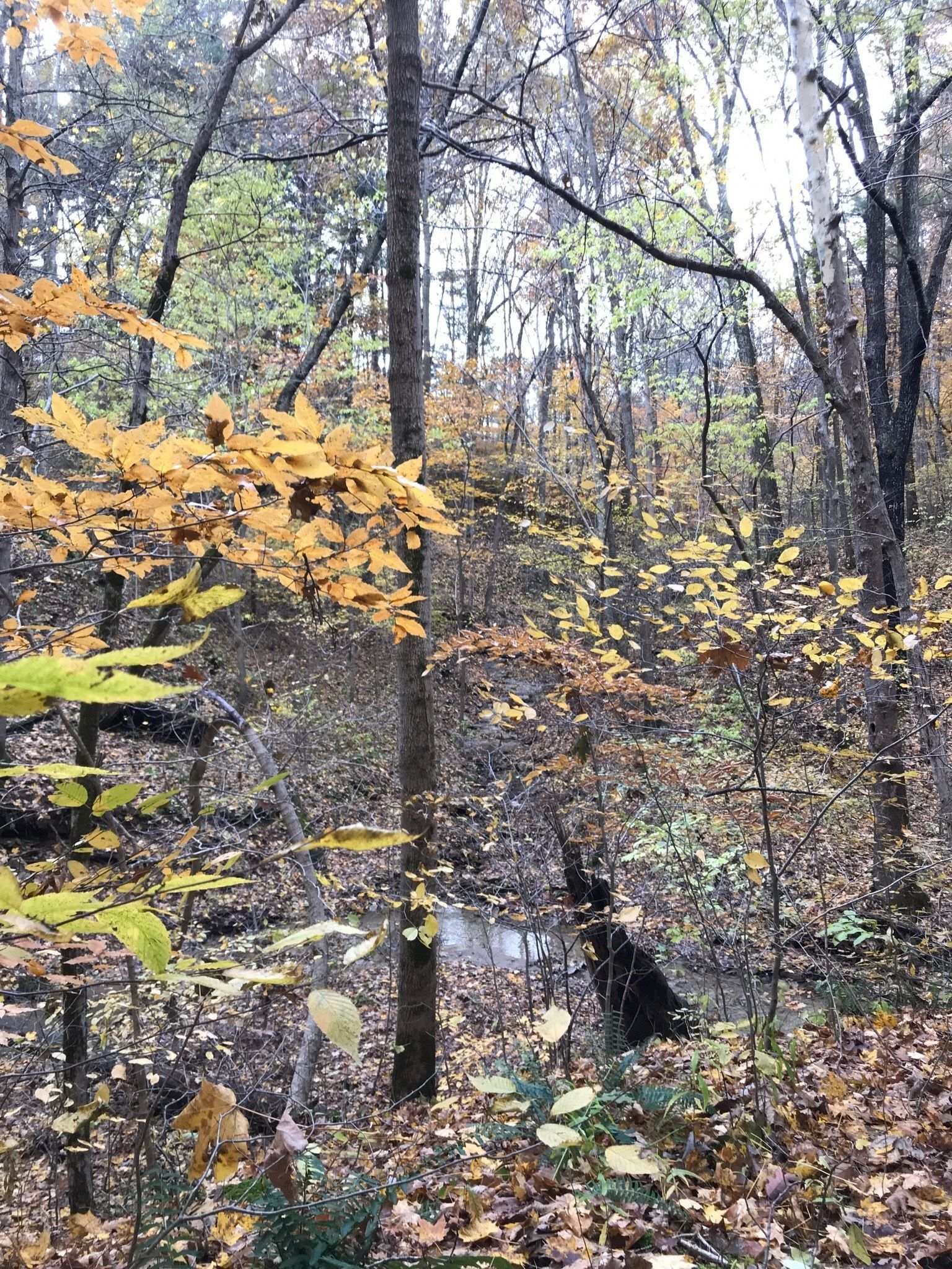 Best Trails In Shades State Park
