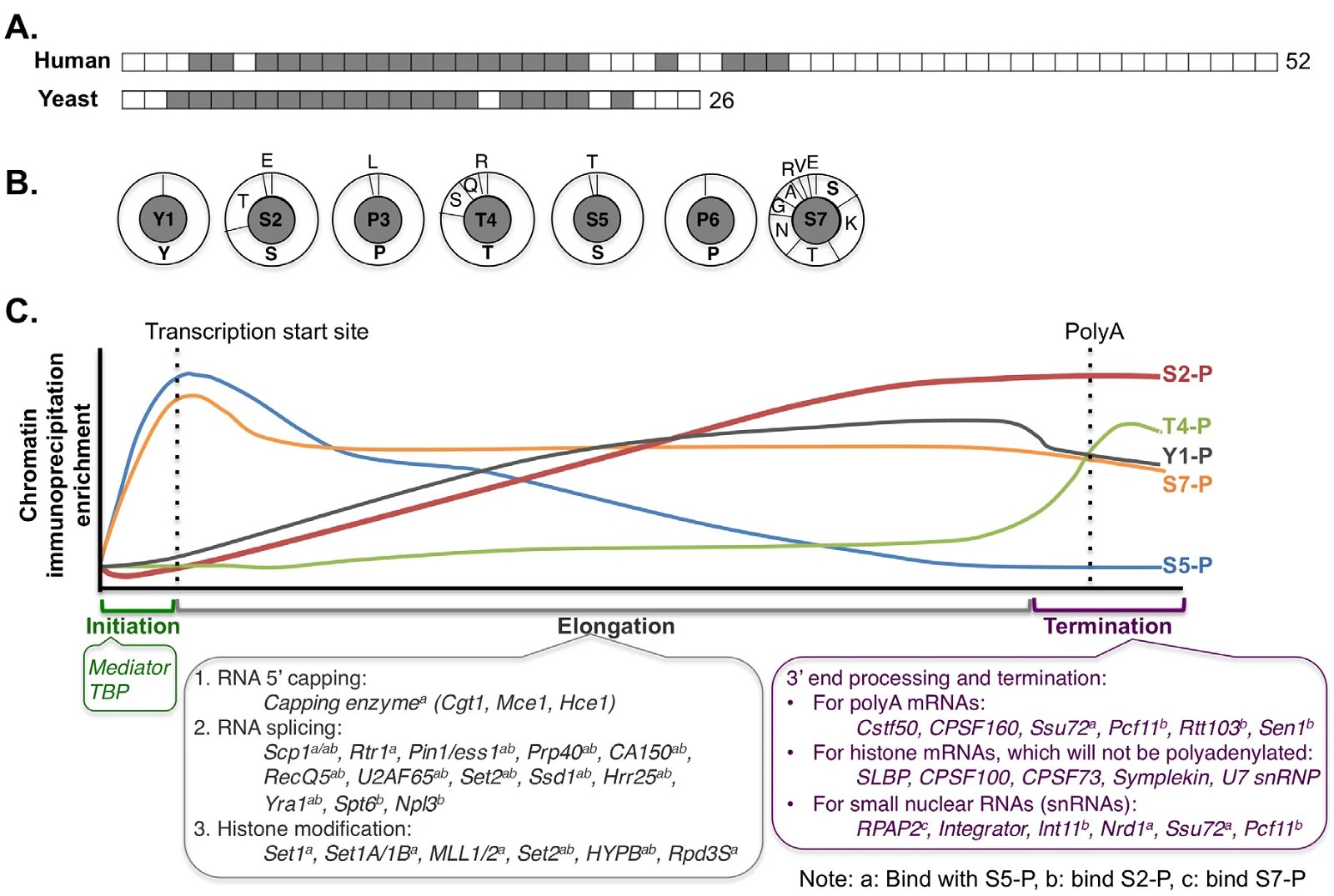 translation vs transcription venn diagram 2000 chrysler 300m engine information processing differences between archaea and