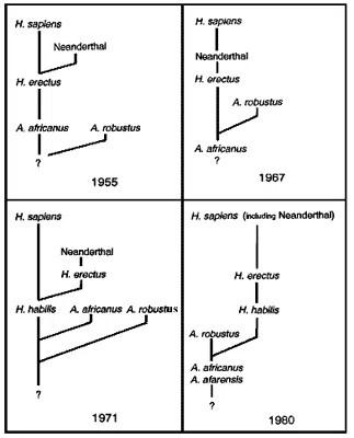 Evolution of human phylogeny