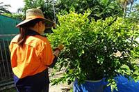 Plant Health Inspectors