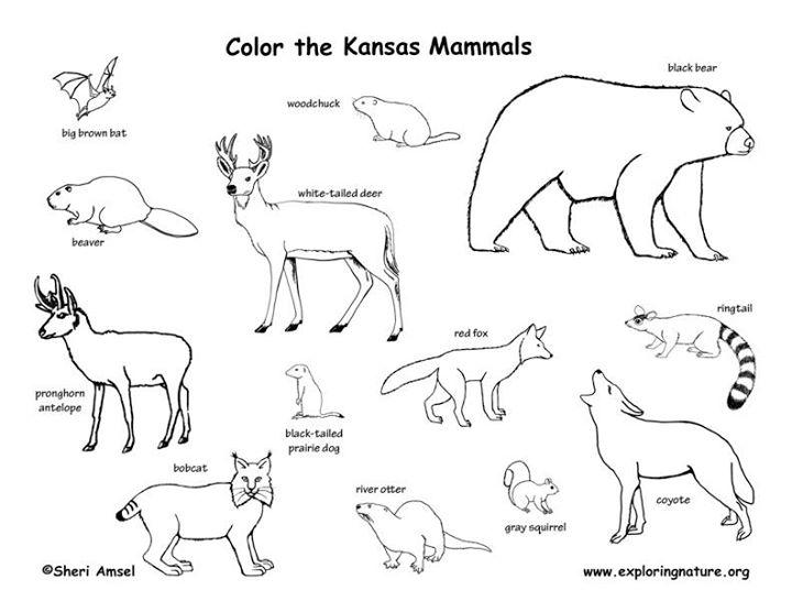 Kansas Kids Preschool Class: Kansas Mammals at Exploration
