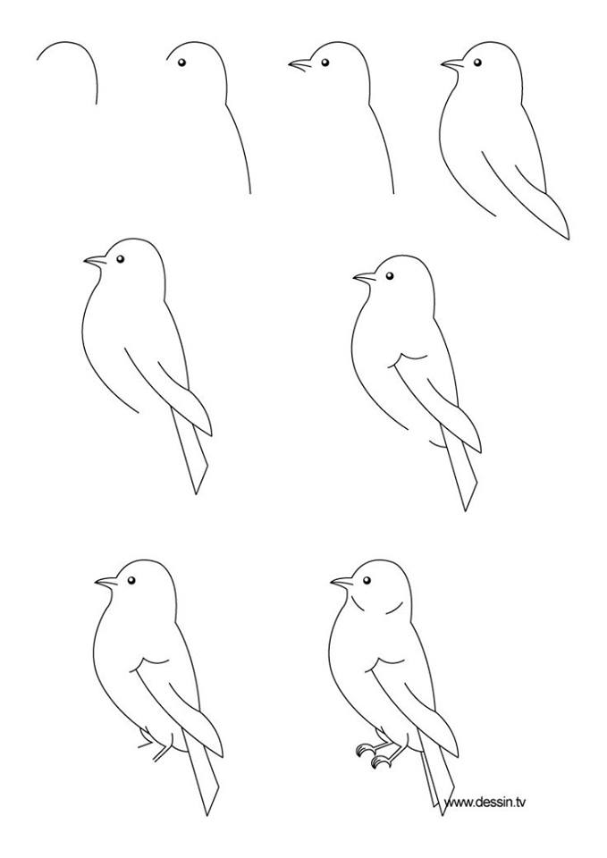 Sketsa Gambar Hewan Yang Mudah : sketsa, gambar, hewan, mudah, Mudah, Menggambar, Hewan, Bikin, Gemar, Melukis