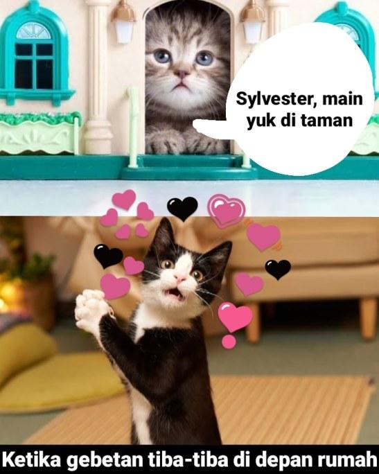 Meme kucing sedang jatuh cinta Berbagai sumber