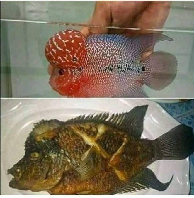Kumpulan Potret Goreng Ikan
