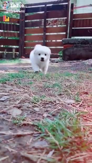 Cute Dog Videos For Whatsapp Status : videos, whatsapp, status, 🎭Whatsapp, Status, Puppy, Video.....atul........, ShareChat, Funny,, Romantic,, Videos,, Shayari,, Quotes