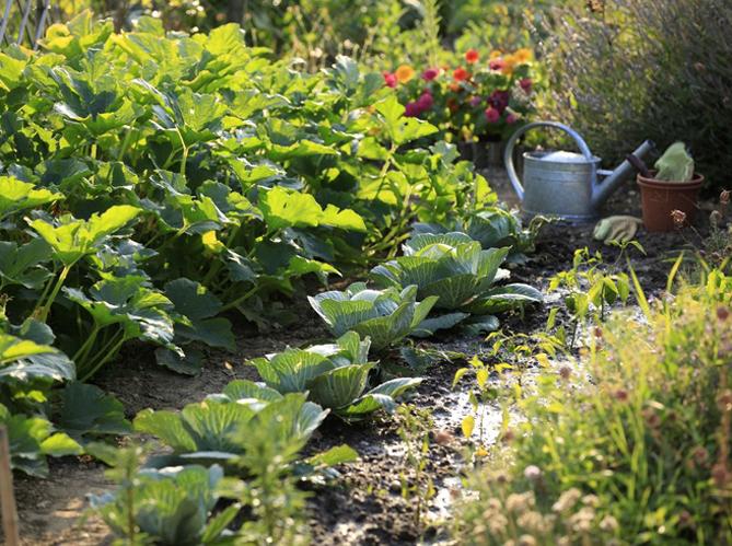 potager ou jardin fleuri comment