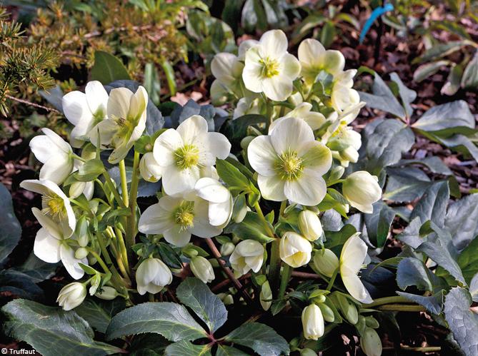 Fleur De Balcon Plein Soleil Pots De Fleurs Suspendus Et