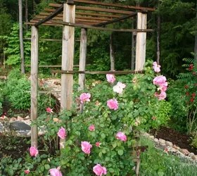 How To Build A Trellis For Climbing Roses  Hometalk