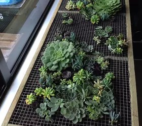 Pallet Wood Vertical Planting With Succulents Hometalk