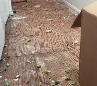 Replacing the Old Carpet With Vinyl Plank Flooring | Hometalk