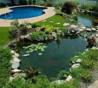 If one pond is good are 2 ponds better?   Hometalk