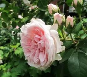 stunning flowers thrive