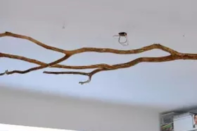 Diy Tree Branch Chandelier Lighting Repurposing Upcycling