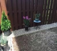 Backyard Makeover: DIY Landscaping Project   Hometalk