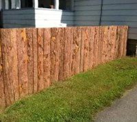 How to Get Backyard Privacy Without a Fence | Hometalk