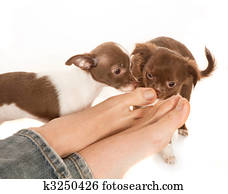 Smelly Pet Stock Images   Our Top 284 Smelly Pet Photos ...