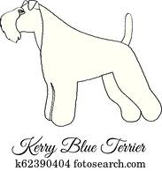 , animal, breeds, canine, dog, kerry blue terrier, show