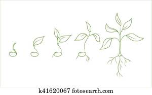 Clip Art of Squence Of Bean Seed Germination In k8846566