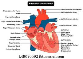 Human Heart Images With Name