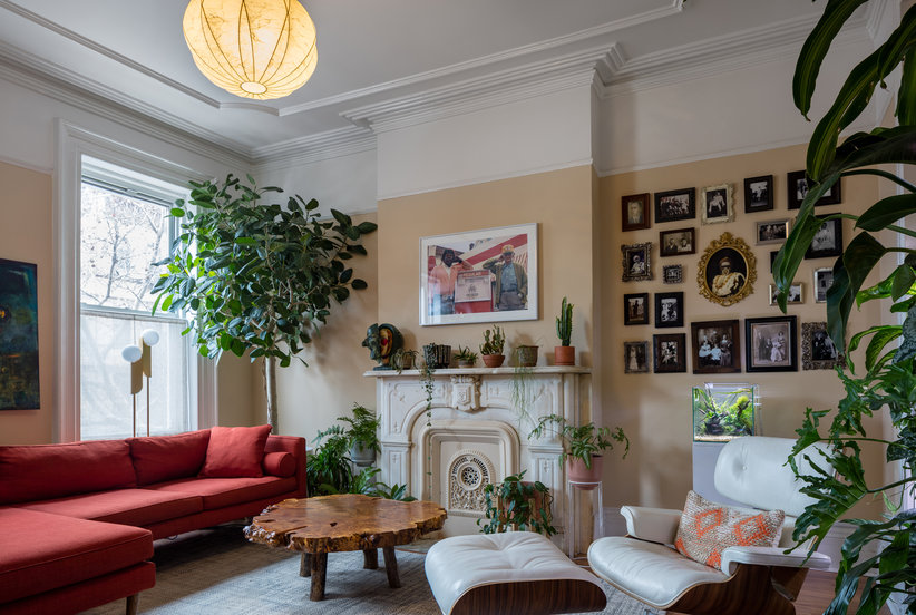 living room tree modern black and white ideas meet the easier to care for alternative fiddle leaf fig