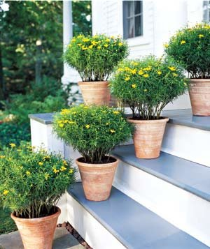 7 Ideas For Container Gardens Real Simple