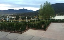 The Stanley Hotel Hedge Maze New