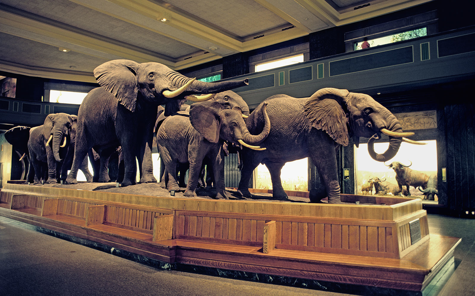 American Museum Of Natural History Travel Leisure