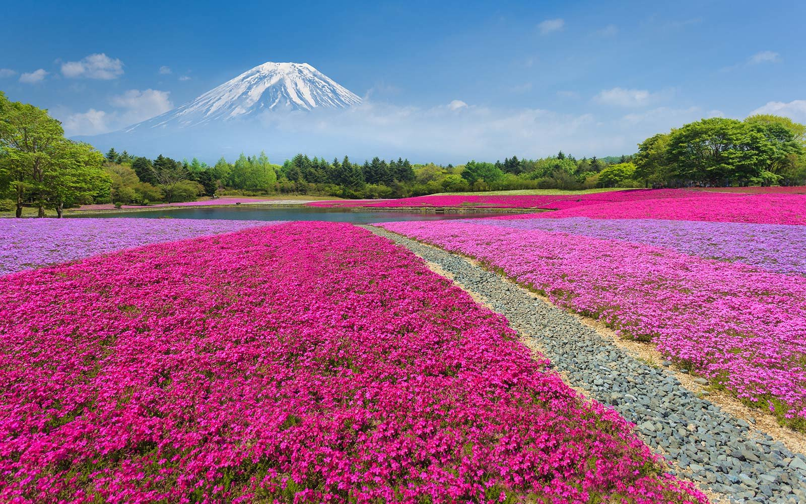 Fall Fields Wallpaper For Iphone This Japanese Flower Festival Almost Doesn T Look Real