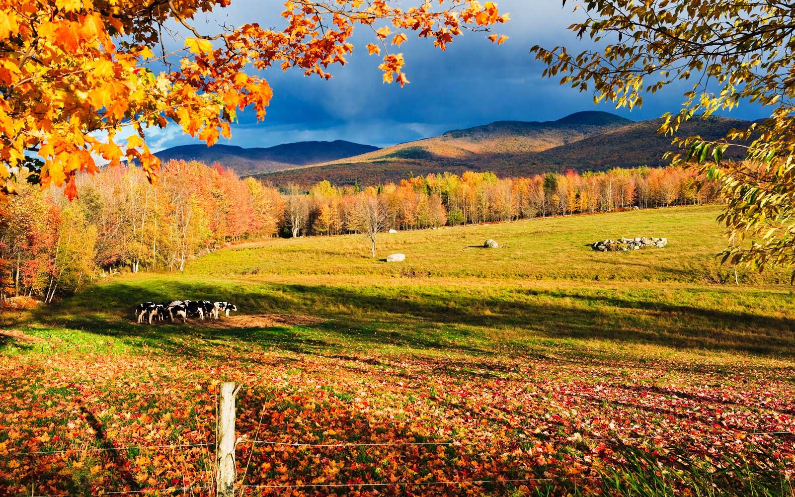 Free Wallpaper Fall Colours 20 Fall Festivals In Canada To Get You Excited For Sweater