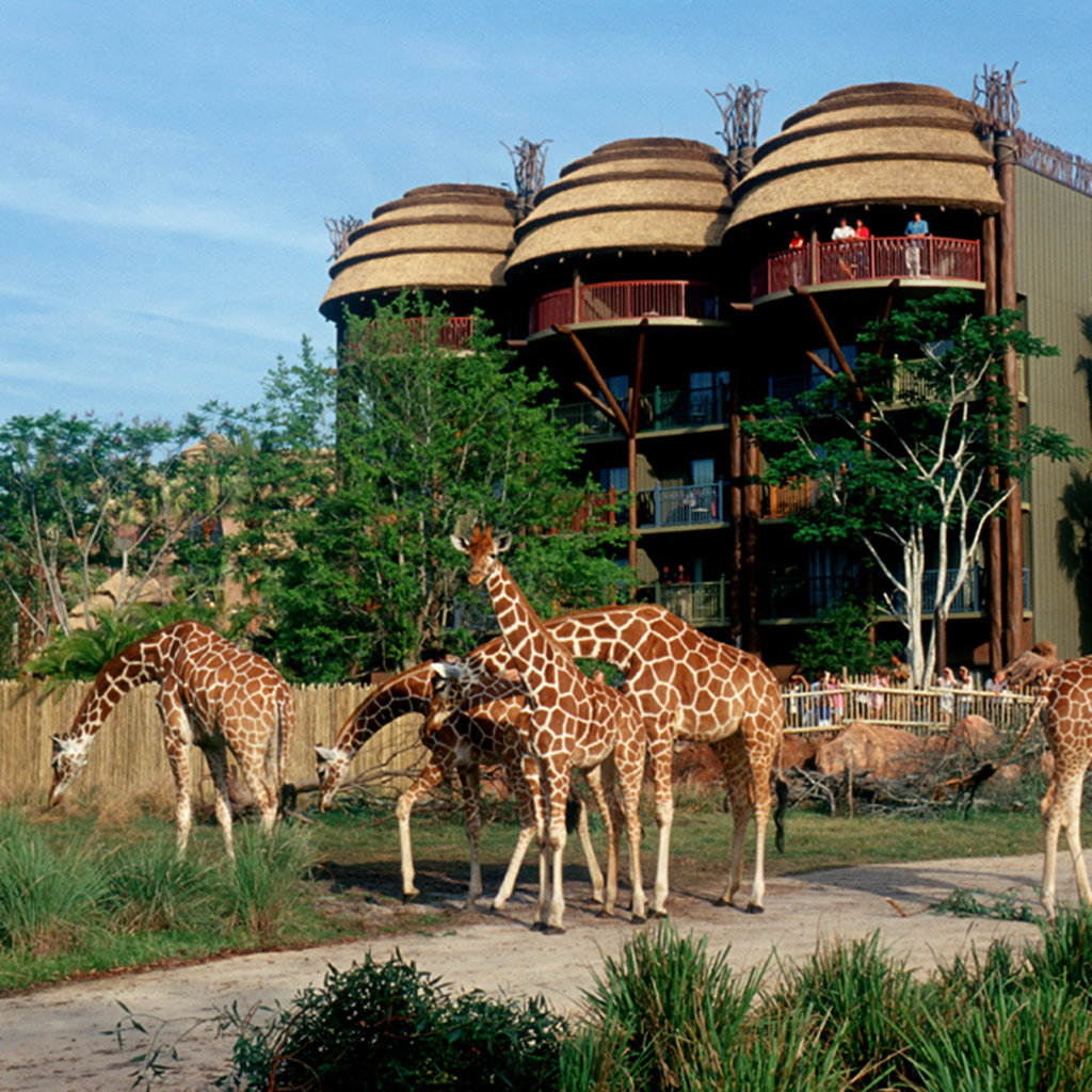 Disney Animal Kingdom Lodge Orlando