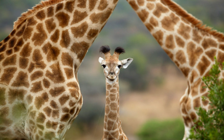 Best Places to See Baby Animals  Travel  Leisure