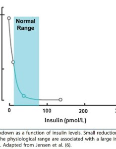 It shows that even small increases in insulin within the normal range virtually abolish lipolysis or breakdown of fat also sweet spot for intermittent fasting  mission medium rh