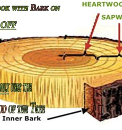 this diagram shows the two key elements of the tree that can effect your barbecue results smokinlicious only harvest wood from the heartwood of the tree  [ 1200 x 675 Pixel ]
