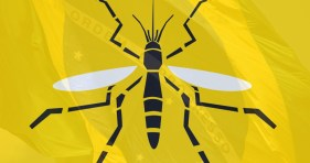 Image result for Yellow fever
