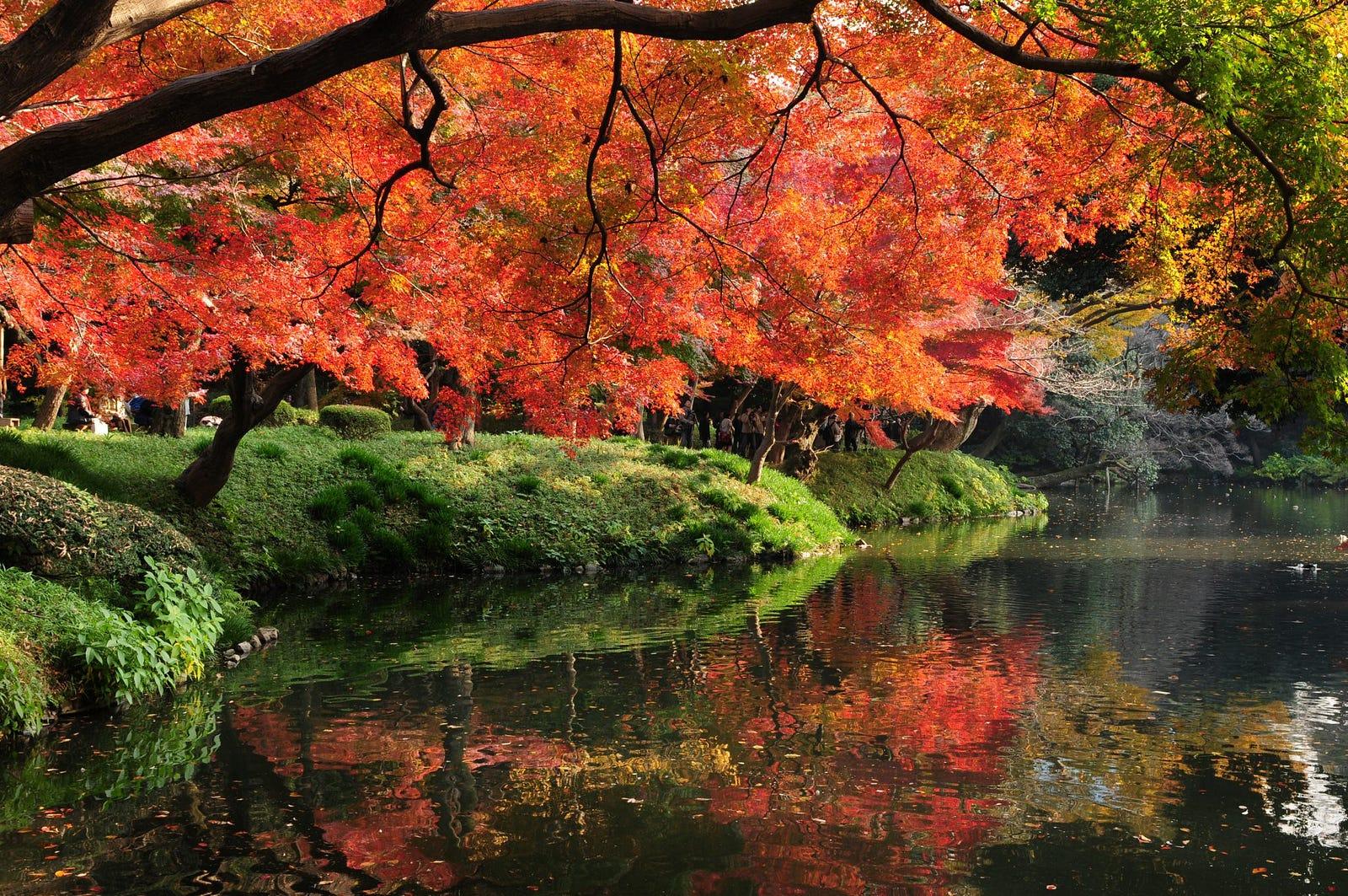 Japan Fall Colors Wallpaper Koishikawa Korakuen Gardens A Different Side Of Japan