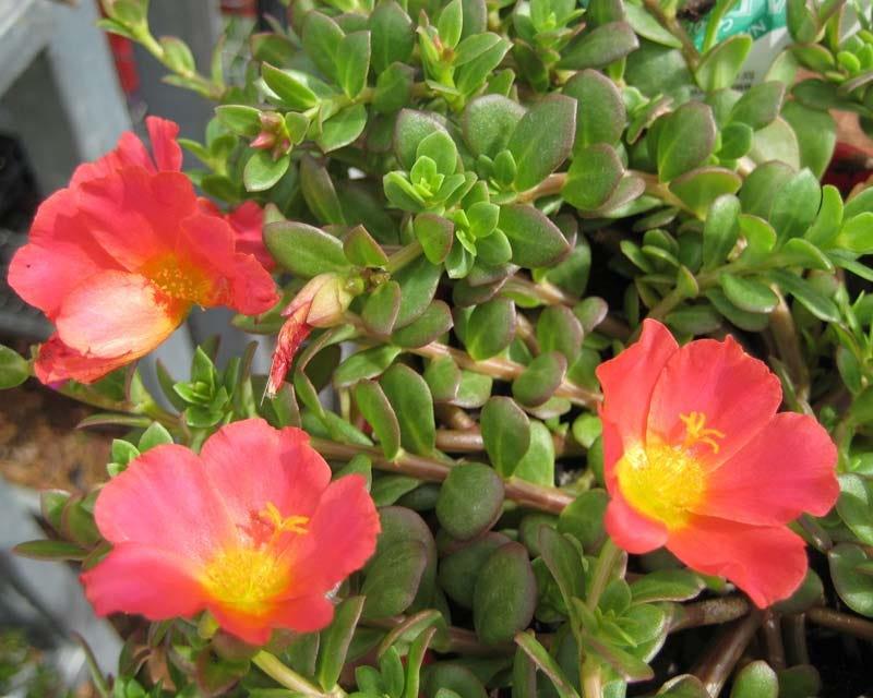 Le 15 piante da gatto da coltivare sul balcone o nel
