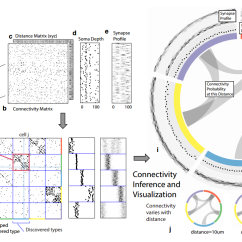 Data Cable Wiring Diagram 2 Wire Alternator Connectomics How The Emerging Revolution In Neural Diagrams They Ve Tested Their Algorithm On Connectome Of C Elegans And Say It Reveals Cell Types Interesting Structures Within