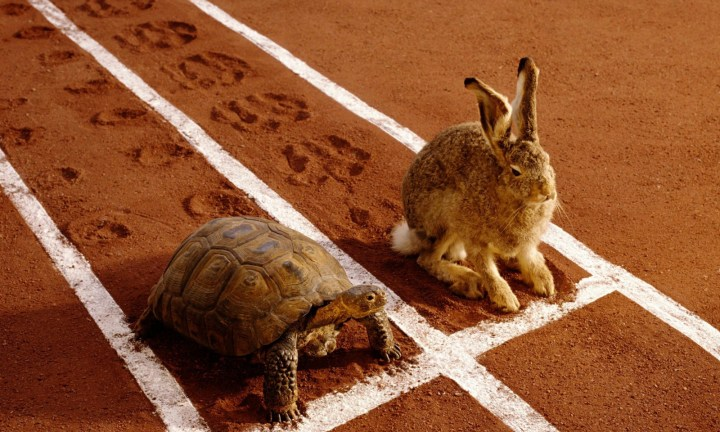 Image result for tortoise and the hare