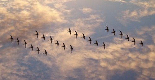Migrating SQL in Drupal 8 with Migrate Tools and Migrate Plus