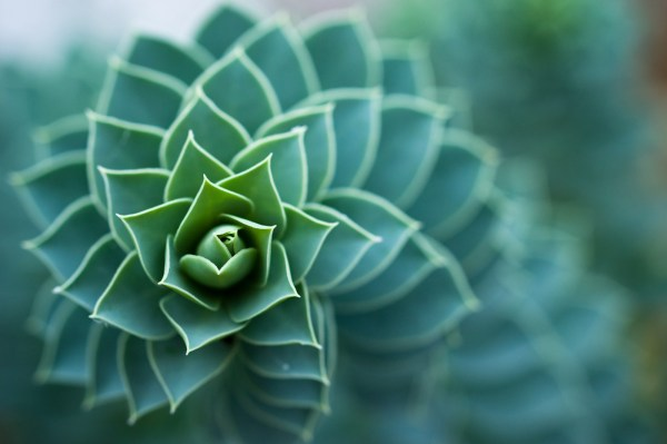 Plants Make Spiral Patterns Roots And Shoots