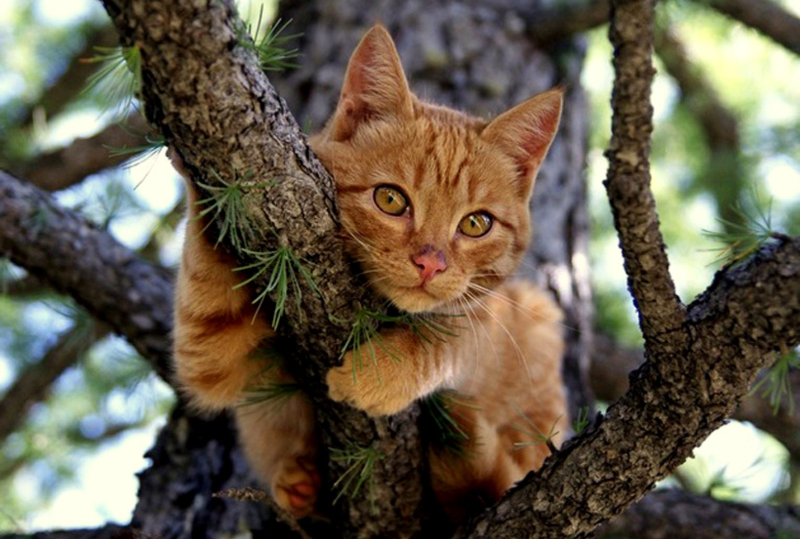 Cute Orange Kittens Wallpaper Have You Ever Seen A Cat Skeleton In A Tree The Impact Of