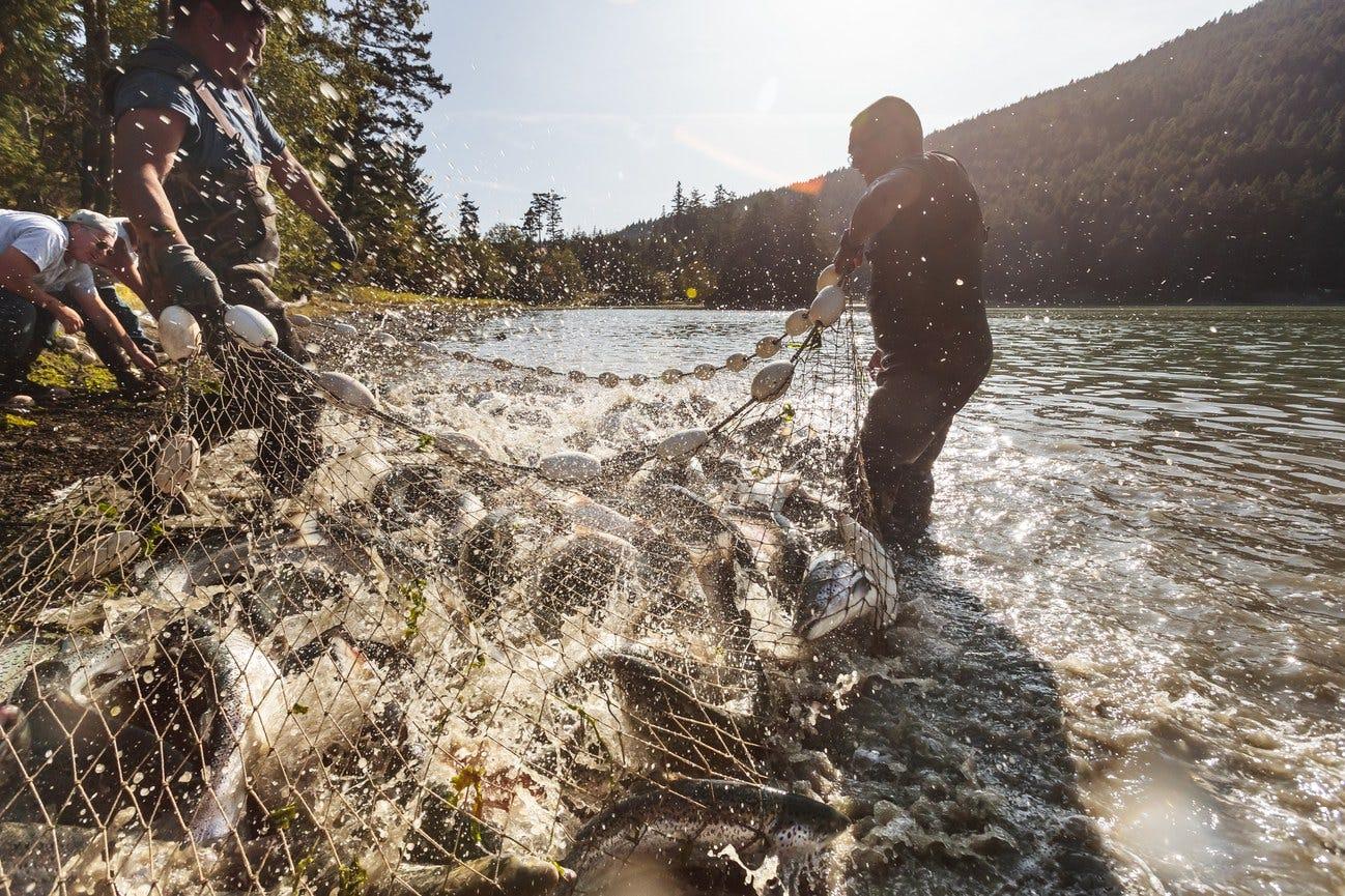 Industrial Ocean Fish Farming  Bad for the Ocean Fish