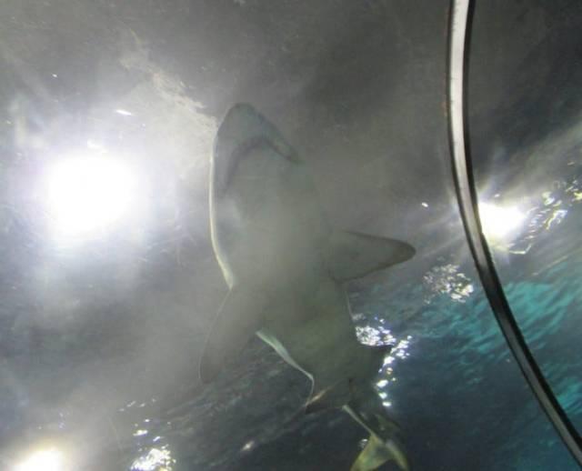 Jaws IV