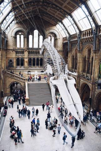 doğa tarihi müzesi iskelet